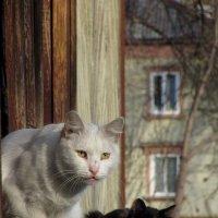 Дневной дозор :: Лидия Суюрова