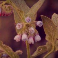 цветочки :: Evgenia Glazkova