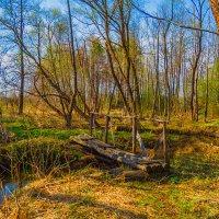 В лесу :: Сергей Цветков