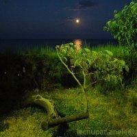 Южная ночь :: Elena Gosteva