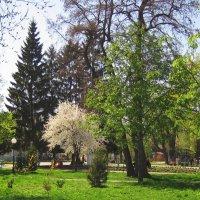 Весна  в красе и буйстве цвета.... :: Анатолий Михайлович
