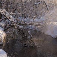 Кузьминки зимой :: Владимир Брагилевский