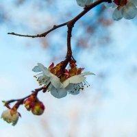 """Фотоконкурс """"Фото цветов на фоне неба"""" от @anri и @garnet :: Наталья (ShadeNataly) Мельник"""