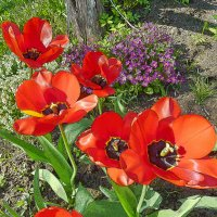 В моем саду :: Валерий Талашов