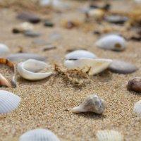 На морском песочке. :: Тамара