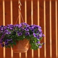 В цветах Сиреневого сада :: Mamatysik Наталья Бурмистрова