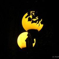 ночь, улица, фонарь... Аптеки нет) :: Наталья NataliNkaC Смирнова