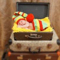 Новорожденный в чемодане) :: Елена Салтыкова(Прохорова)