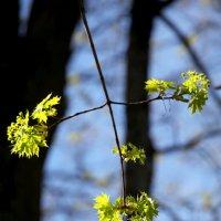 Царскосельская весна :: Ирина Фирсова