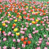 В Самаре весна! :: Надежда