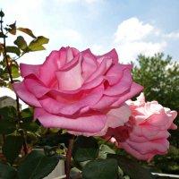 Подарок к дню мамы (муттертаг)...а запах!!!!! :: Galina Dzubina