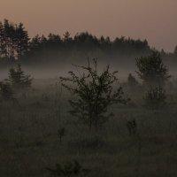 туман :: Геннадий Свистов