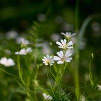 Лесные цветы :: Михаил Сандарьян