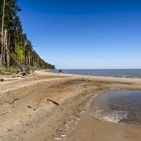 На берегах Куршского залива :: Lusi Almaz