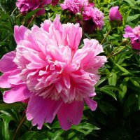Воздушная красота цветка . :: Александр