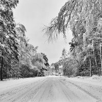 Зимняя дорога :: Александр