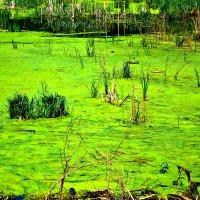 Эх и трудная это работа, .... тянуть из болота! :: Михаил Столяров