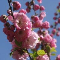 Салют весне... :: Тамара (st.tamara)
