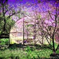 Майский сад :: Григорий Кучушев