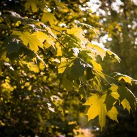 Прогулка по лесу :: Михаил Сандарьян