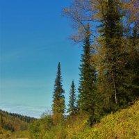 Близится осень :: Сергей Чиняев