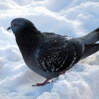 птиц :: Наталья NataliNkaC Смирнова