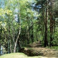 А может, чтобы спасти это лес, надо его внести в красную книгу заповедных зон? :: Ольга Кривых
