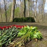 скромная могила Льва Толстого :: Георгий