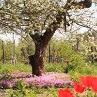 Весна на даче :: Gen Vel