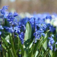Весна в Петербурге :: Екатерина