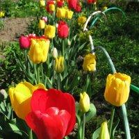 Красота в саду :: sm-lydmila