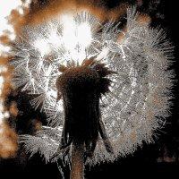 Солнечный цветок :: олег свирский