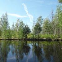 отражение в пруду :: Владимир
