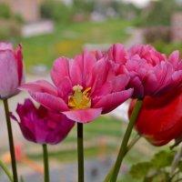 Весенний букет :: Геннадий