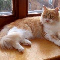 Кошка Алиса. фото-1. :: Nata