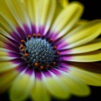 цветок :: Артур