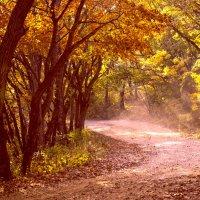 Осенний свет :: Ирина Червинская