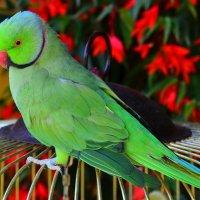 Мой любимый попугай :: Татьяна Каневская