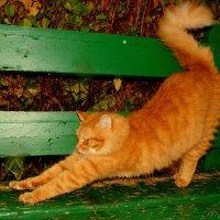 про котиков 1 Рыжий Кузя :: Александр Прокудин