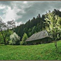 Весна в Карпатах. :: Юрий Гординский