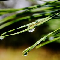 Посде дождичка в четверг, точнее в субботу... :: Dmitry Saltykov