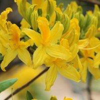 Весна :: mirtine