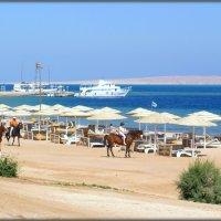 На пляжах Египта :: Михаил