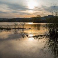 На  болоте :: Александр Паклин