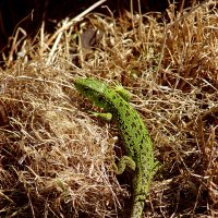 Зеленое чудовище :: Aleck Horn Antony