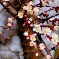 весенняя флора 1 :: Александр Прокудин