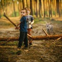 вечер в сосновом лесу :: Александр Майструк