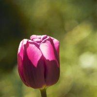 Майский цветок :: Aнна Зарубина