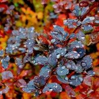 Осень. :: Евгений Яхим