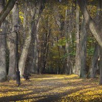 Осенью в старинном парке :: Valery Remezau